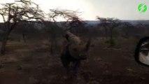Quand un rhinocéros en colère charge une voiture... Terrifiant
