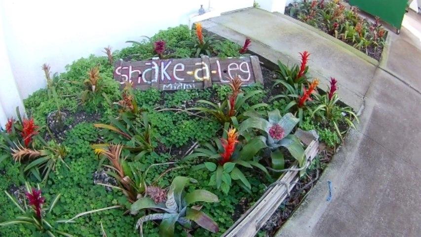 Shake-a-leg Miami