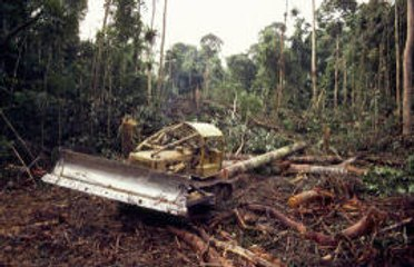 A brief look into deforestation