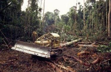 A brief look into deforestation