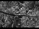 The Treasure of the Sierra Madre (1948) Trailer