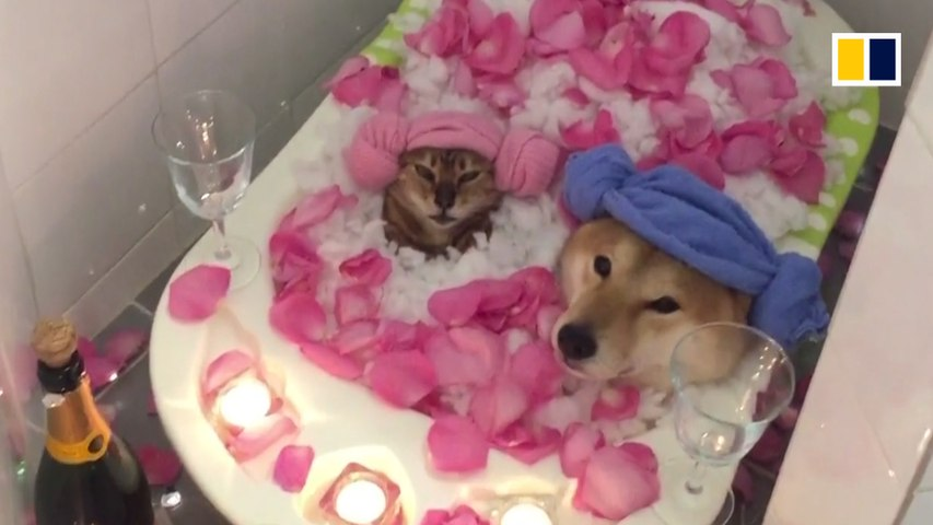 The ultimate cute animal couple