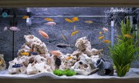 Les critères de cohabitation des poissons en aquarium
