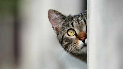 Are you anxious? That's why your cat is overweight!