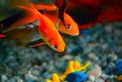 Les espèces de poissons les plus faciles à maîtriser pour débuter