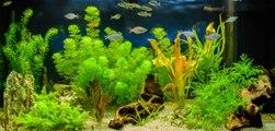 Les meilleures plantes d'aquarium