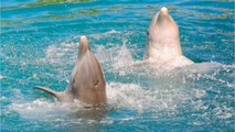 These Dolphin Facts Will Impress The Heck Out Of You