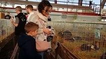 Plus de 500 visiteurs au salon avicole de Château-Salins