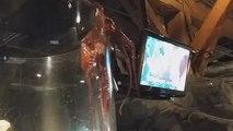 Ce poulpe tente de s'évader de son aquarium