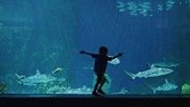 Comment réaliser un aquarium marin