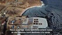 Russie:Greenpeace s'inquiète pour les mammifères marins captifs