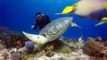Cozumel Dive Trips - The Reefs of Cozumel