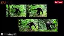 Neuroplanète 2017 :  Evolution des grands singes à nous et après