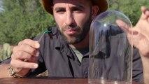 Insolite : Ce Youtubeur se fait mordre et piquer par des insectes pour sa chaîne