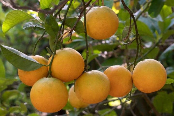 Lebensmittel, die dich mit Vitamin C versorgen