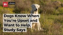 Dogs Actually Do Want To Come To The Rescue