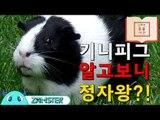 기니피그, 알고보니 정자왕?! [신비한 동물사전 8회] #잼스터