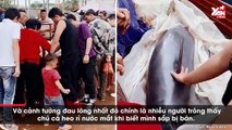 Cảm động nhìn cảnh cá heo chảy nước mắt khi biết mình sắp bị cân ký bán thịt