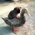 This image gives a good mood just by duck and dog looking at it. It takes a few seconds to smile
