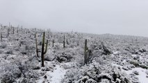 Avez-vous déjà vu de la neige dans un désert?