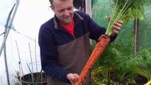 Il cultive des carottes géantes ! Pas vraiment bio non ?