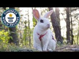 Taawi: Adorable bunny sets trick record - Meet The Record Breakers