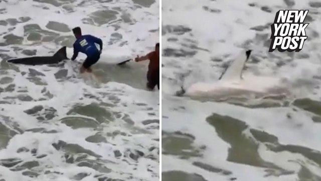 Fishermen wrestle with great white shark
