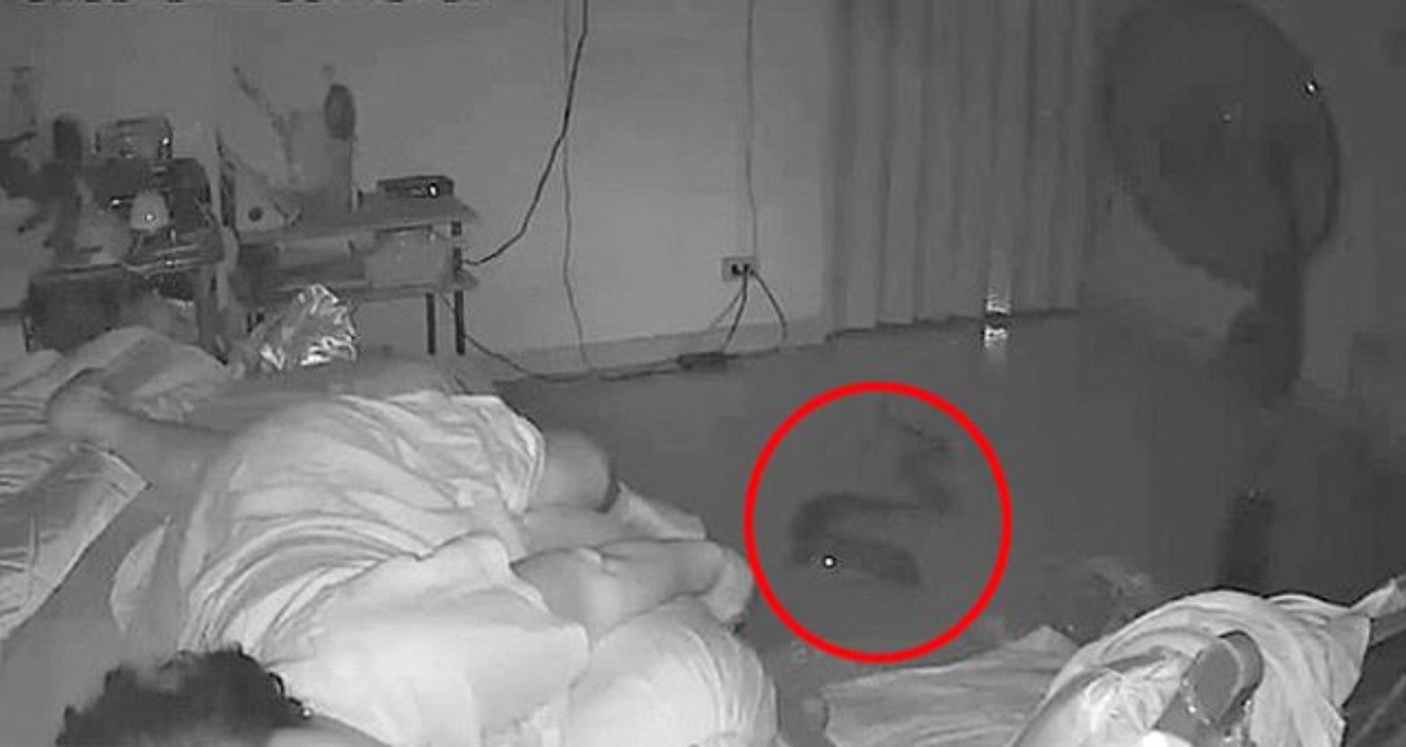 Dev Pitonun Uyuyan Kadını Isırdığı Görüntüler Saniye Saniye Kaydedildi