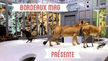 Bordeaux Mag présente : la visite du Muséum par Nathalie Mémoire sa directrice