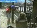 Gratte gratte le petit singe