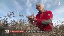 Le Mont-Saint-Michel : un écosystème à préserver