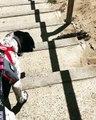 Quand un chien voit un lézard pour la première fois. Réaction hilarante !