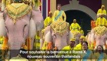 Thaïlande: des éléphants rendent hommage au roi Rama X