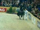 Champion 2008 des étalons frisons : Haitse 425