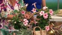 Nordstil Dekoration Imke Riedebusch Video Dailymotion