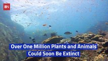 The Earth Is Facing A Massive Extinction Event