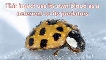 What Do Ladybugs Eat- Facts About Ladybugs - Animal Video 2019