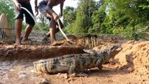 Easy Crocodile Trap - Build Deep Hole Underground Using Deep Hole & Chicken That Work 100% By Men