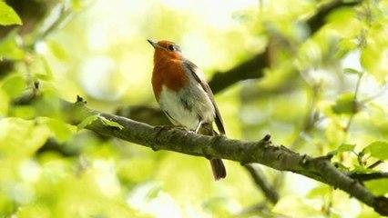 Sauvez les oiseaux - Groland Le Zapoï du 02/03