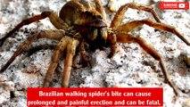 Spider venom drug could be more effective than Viagra