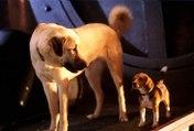Cats & Dogs Movie (2001)  - Jeff Goldblum, Elizabeth Perkins