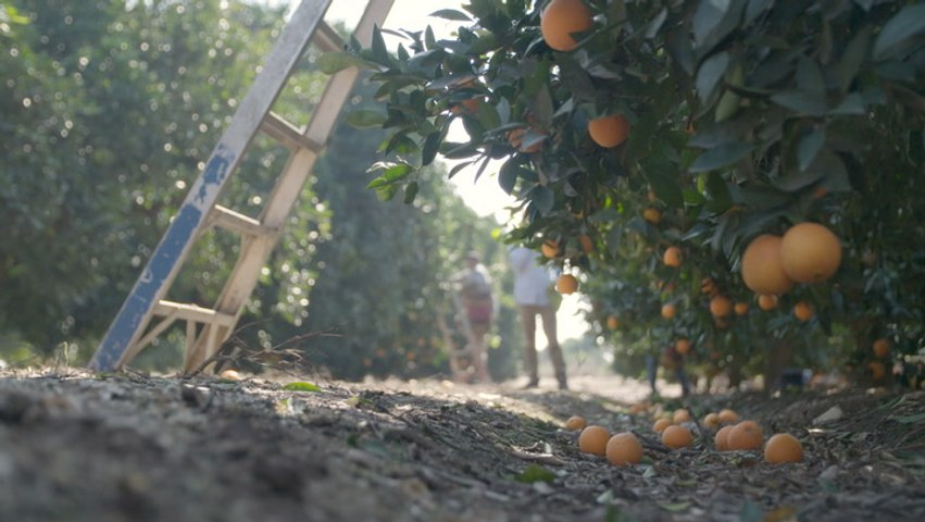 Meet the Millennials Championing Ugly Produce