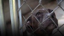 Saving Dogs on Death Row
