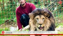 Michal Prasek Owns A Lion Mauled By A Lion He Owned