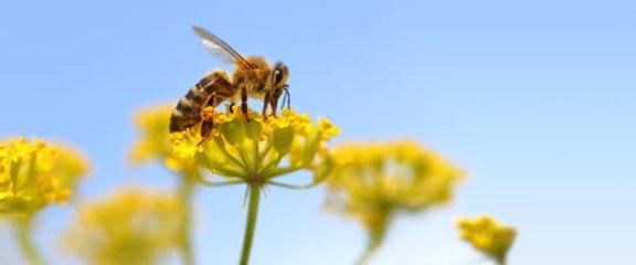 New Study Says Honeybees Can Do Basic Math