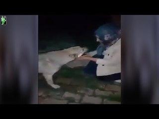 هل اصبح الكلب اوفى من بعض البشر !  ردة فعل كلب بعد ان سقته فتاة
