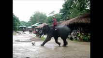 THAILANDE   - DES  ELEPHANTS  ARTISTES ?