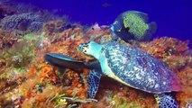 Cozumel Snorkeling - The Reefs of Cozumel