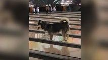 Hund sorgt für Chaos auf der Bowlingbahn