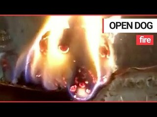 Bizarre video shows a log burning in a fire at a temple which looks exactly like a DOG | SWNS TV